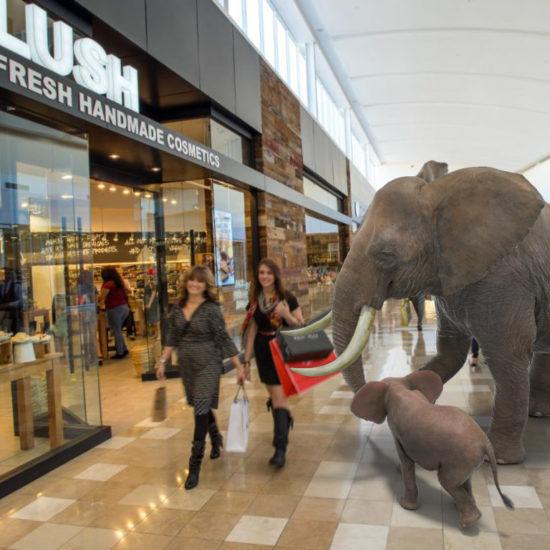 elephants en réalité augmentée